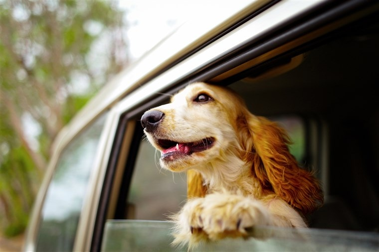 Purchasing Pet Insurance- Go Through Best reviews