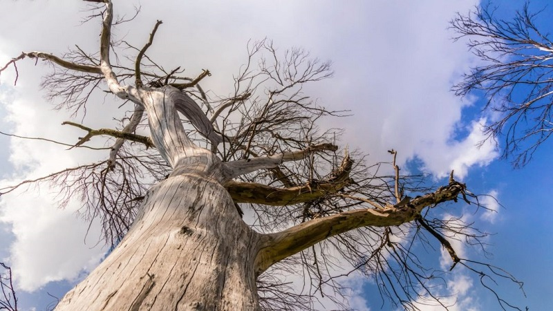 4 Signs a Tree Is Unsafe