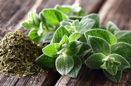 Interesting Facts About Oregano: The Soul Of Pizza
