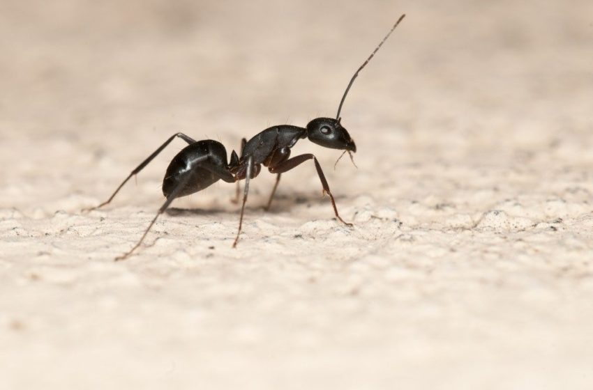 Things That Can Make Pests to Infest Your Home