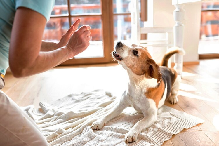 Tips on Choosing The Right Dog Boarding Centre