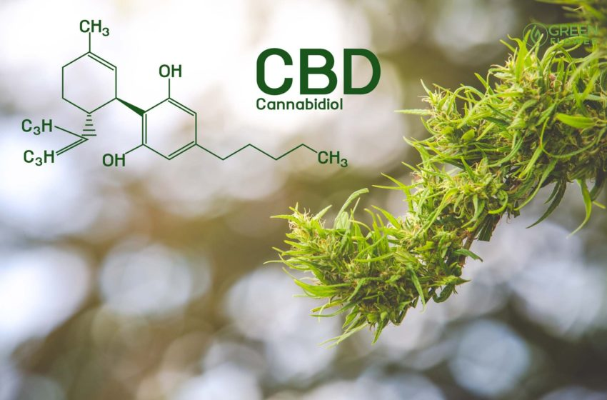 Top 8 Surprising Benefits of CBD Edibles