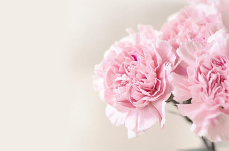 Importance of Flowers in Our Daily Life and Special Events