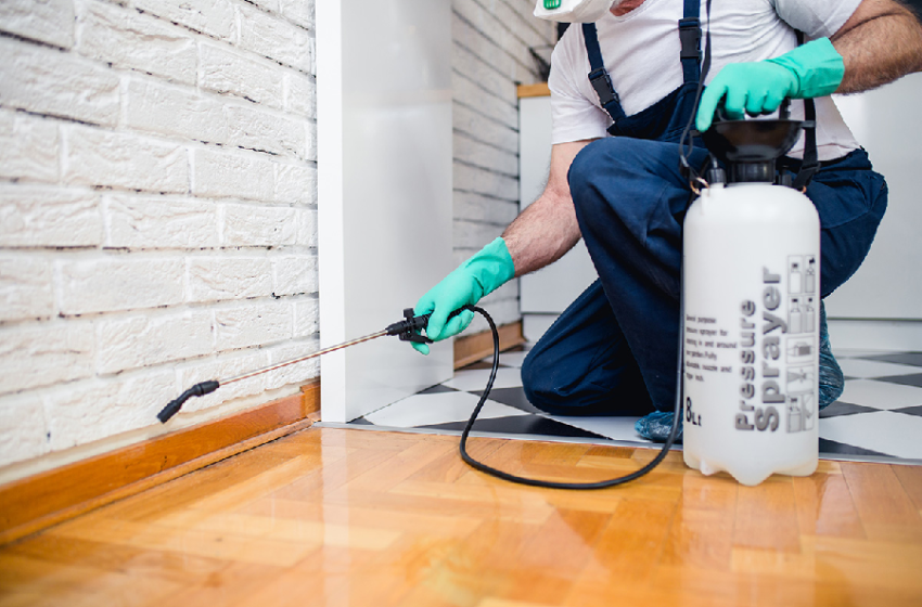 Avoid Infestation of Pests Through Pest Control Services of Manchester
