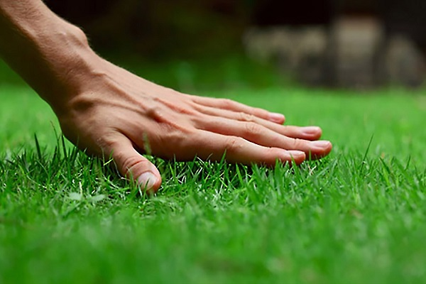 What is The Best Lawn Fertilizer to Use?