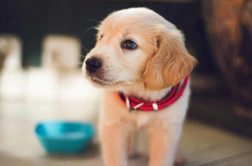 Three Easy Things To Teach Your New Puppy in San Francisco, California